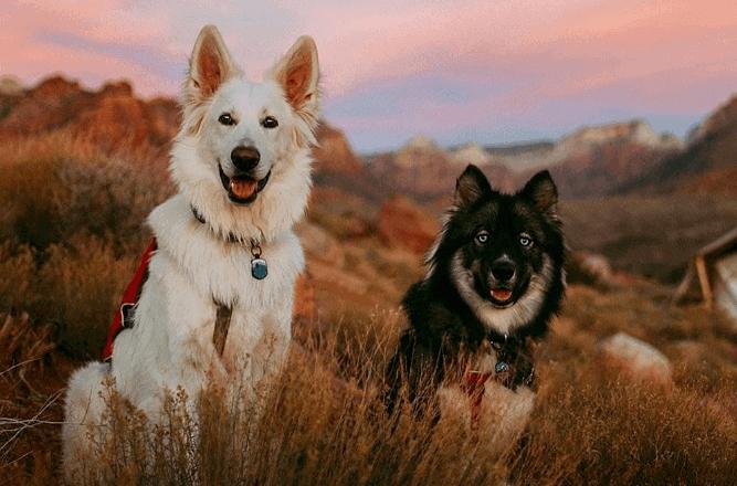 qalo dog tracking